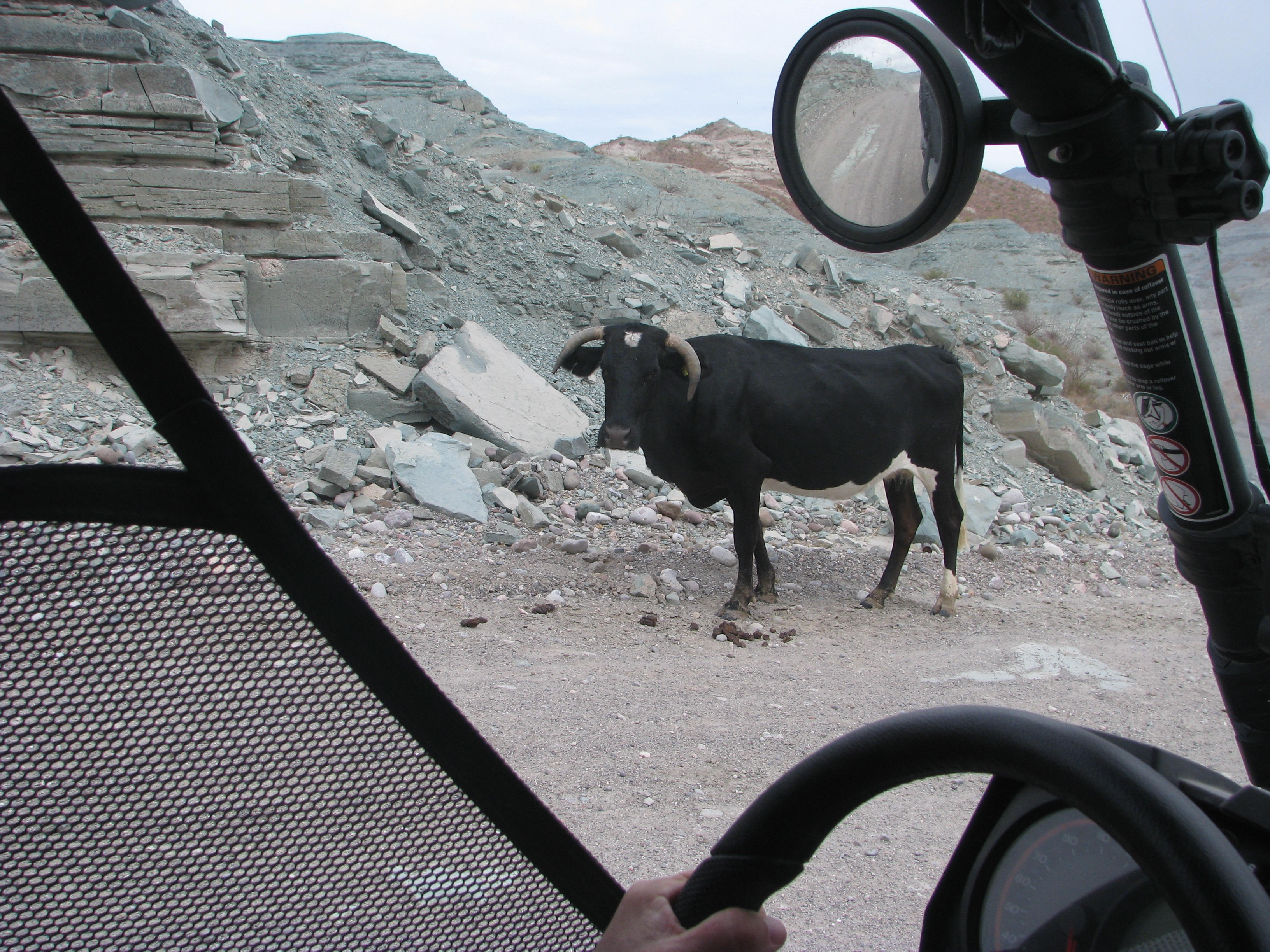 OffRoadCow